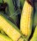 Sweet Corn .png